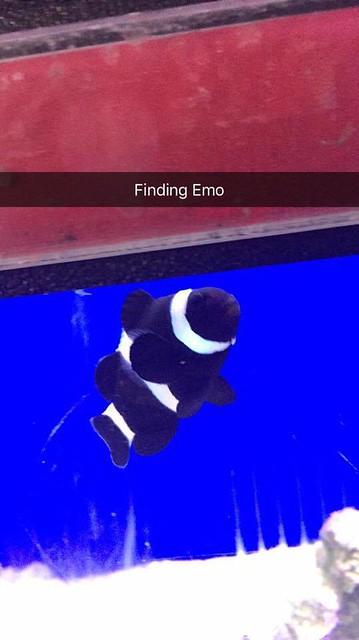 My girlfriend sent this to me to cheer me up - Finding Emo.