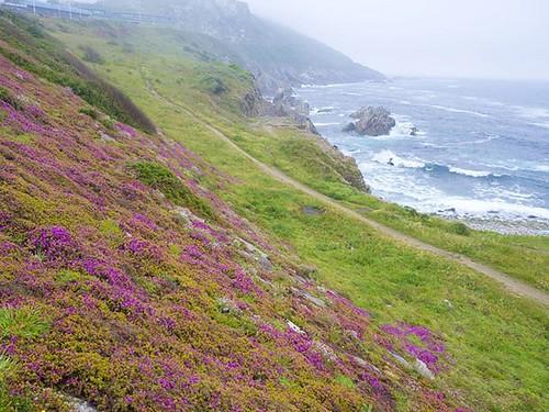 Flowers. #spring #Coruña #ocean #olympus #olympusomd #naturalezaurbana