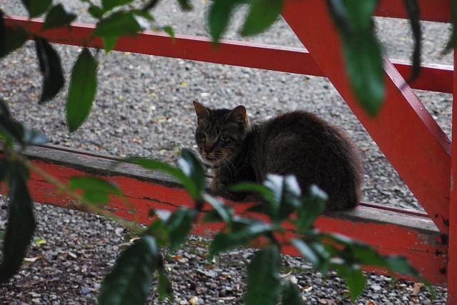 Today's Cat@2018-05-31