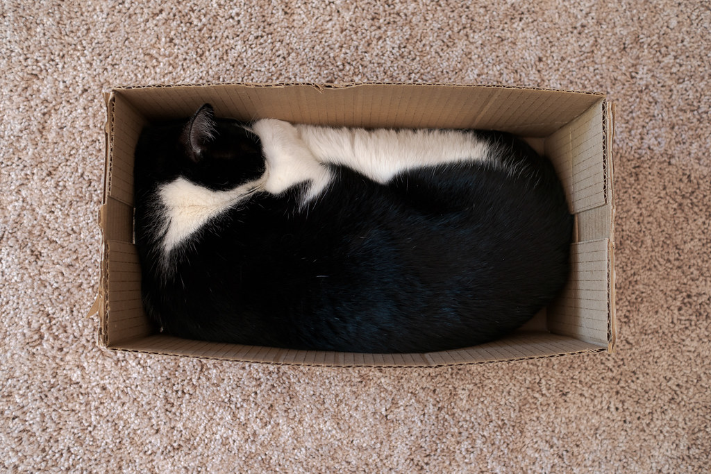 Our cat Boo sleeps squished up in a cardboard box