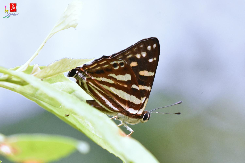 Butterfly_5418