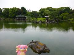 Audino in Fukagawa, Tokyo 52 (Kiyosumi Garden)