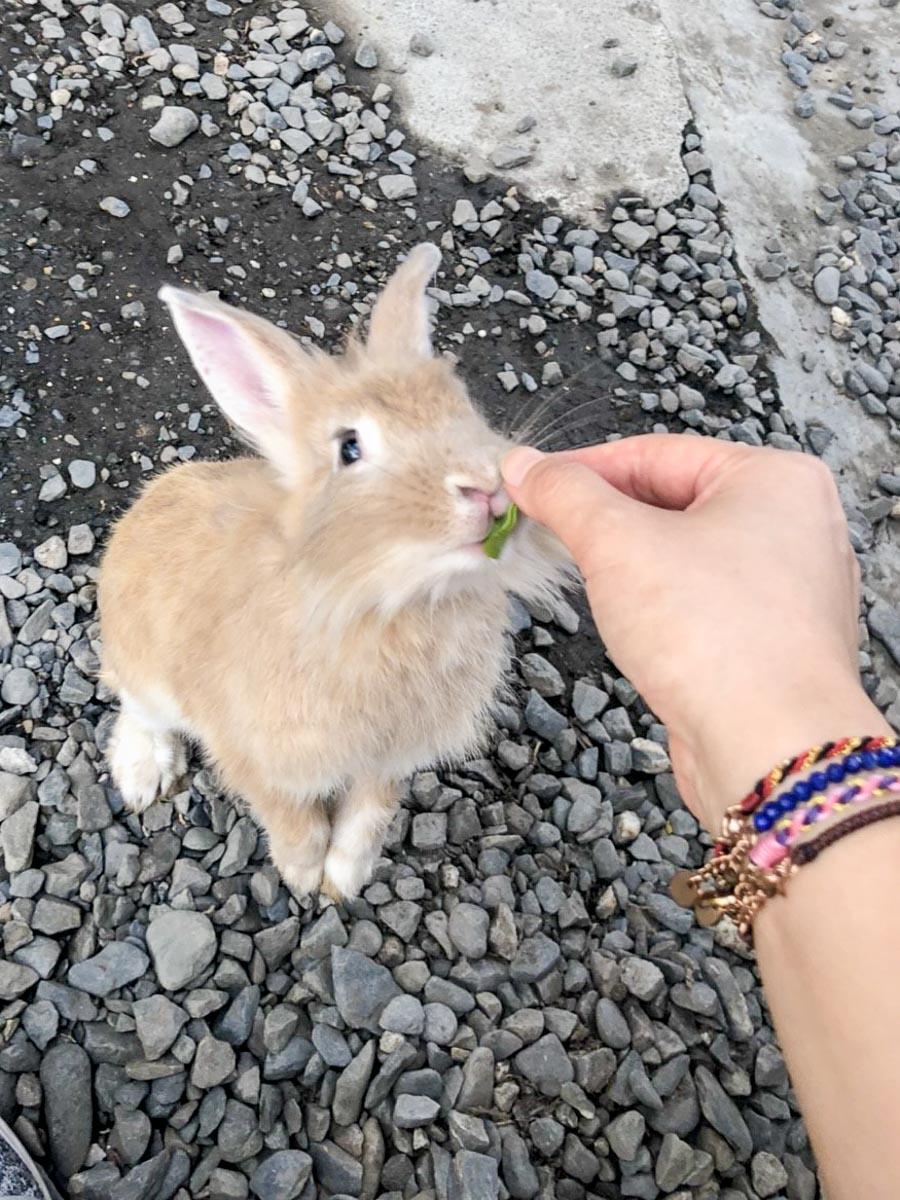 蕭家大院兔子寵物餐廳-3