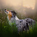 Dogs in Lavender by davidevolpi (thanks for 1,5 million more views)