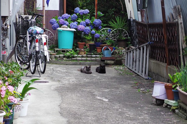 Today's Cat@2018-06-10
