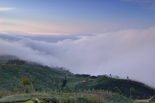 Sea of clouds at tea field,大崙山雲海