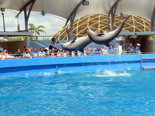 Seaquarium dolphins 04-20180604