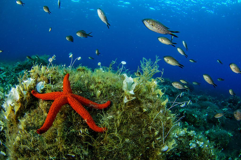 EUO © OCEANA Juan Cuetos Outside Salina Port_0166