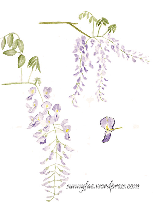 purple wisteria sketch