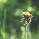 20180530-181231 - Garden Flower Bokeh