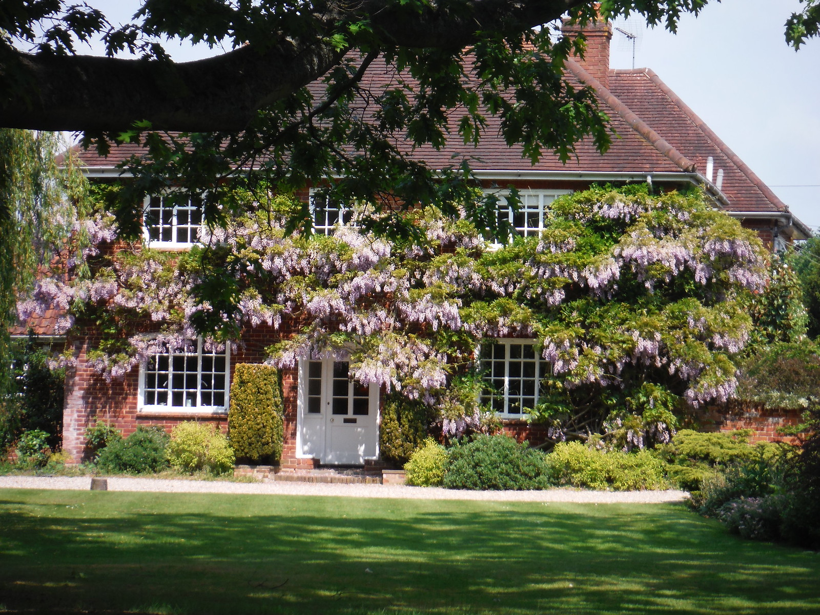 Wisteria-covered House in Stock SWC Walk 158 - Ingatestone to Battlesbridge or Wickford