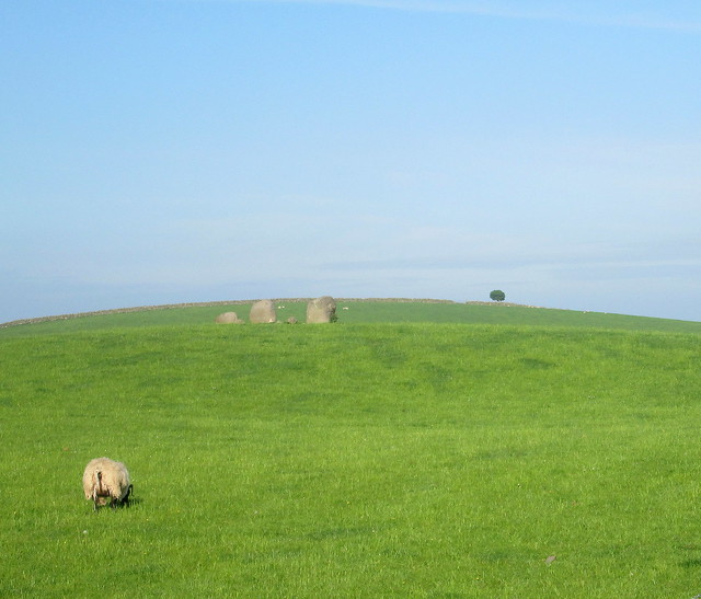 Torrhouse  stone circle + lollipop tree
