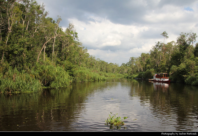 Tanjung Puting NP, Borneo, Indonesia