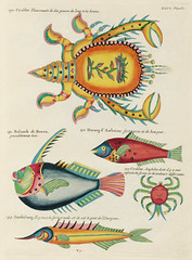 Colourful and surreal illustrations of fishes and crabs found in the Indian and Pacific Oceans by Louis Renard (1678 -1746) from Histoire naturelle des plus rares curiositez de la mer des Indes (1754).