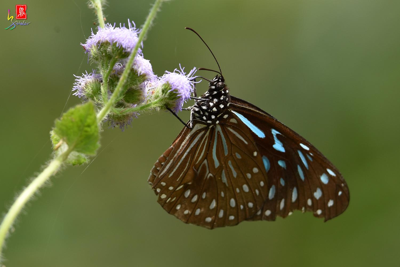 Butterfly_8685