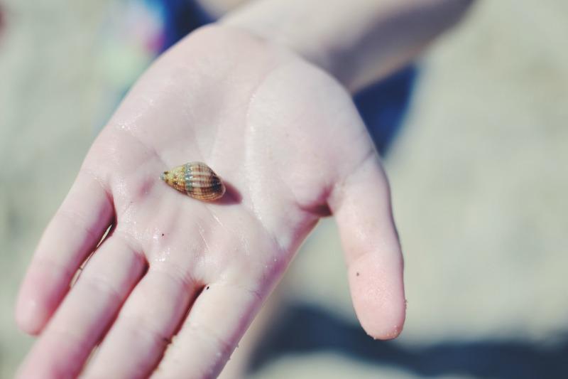 shell Studland Bay