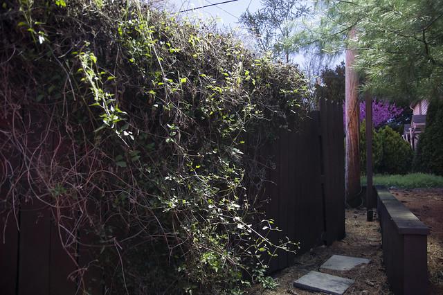 May 4 - Secret garden