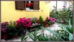 Romagna in fiore