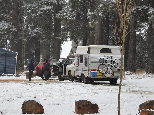 Hardy campers