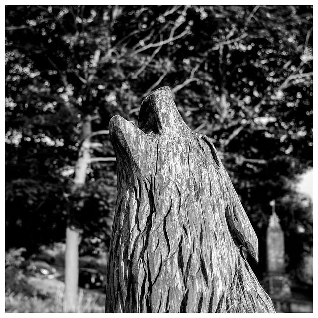 Timber Wolf , Stirling, Fujifilm X-Pro1, XF18mmF2 R