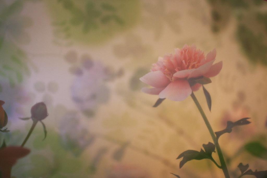 横浜山手西洋館 花と器のハーモニー2018の山手234番館のシフォン生地と芍薬を使ったフラワーアレンジメント