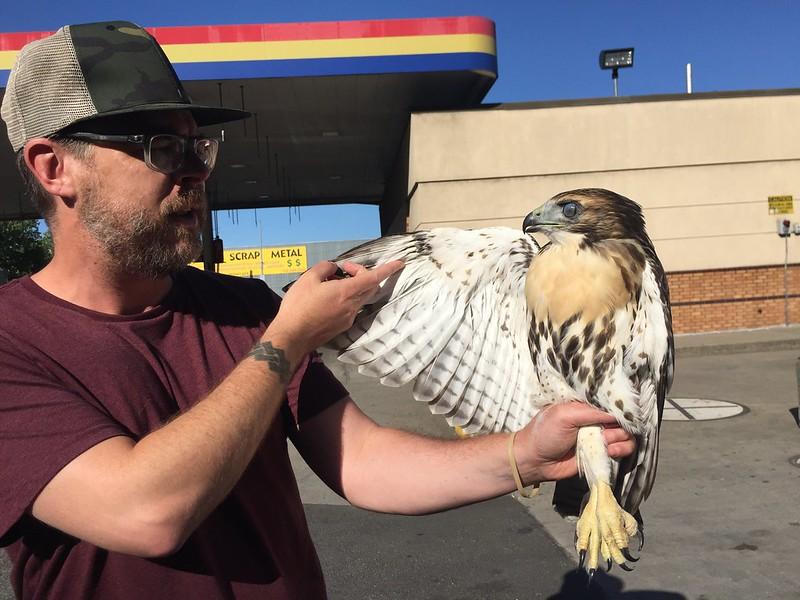 Hawky rescue