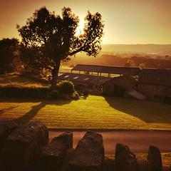 Barlow, Derbyshire #sunset #farm #tree #golden #britain #england #field #summer #green #nature #landscape #landscapephotography #derbyshire #travel #travelphotography  #huawei  #huaweip20 #holiday #amazingearth #amazing_shotz #visitengland #bbctravel