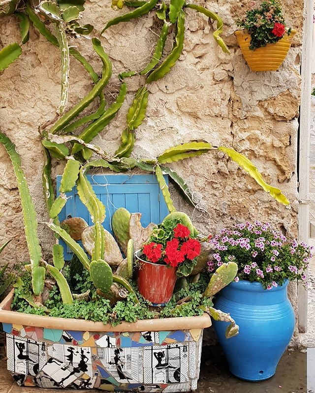 Sicilian colors #marzamemi #sicily #sicilia #colors #colorful #flowers #red #blue #wall #fichidindia #photooftheday #picoftheday #instagood #instago #travelgram #igers #igersitalia #awesome