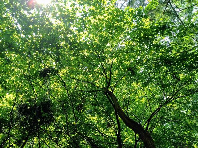 湧谷山 登山道 新緑