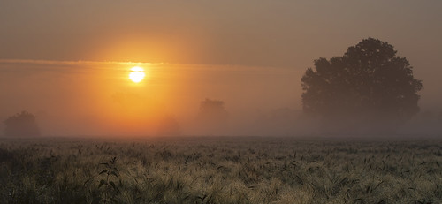 corn dew sunrise