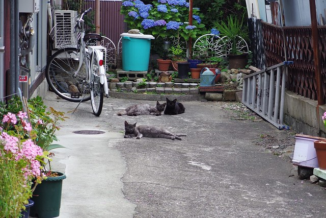 Today's Cat@2018-06-03