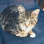 20180605-132550 - Cat Bokeh