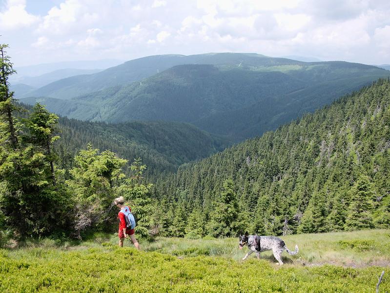 góry psem Jeseniki