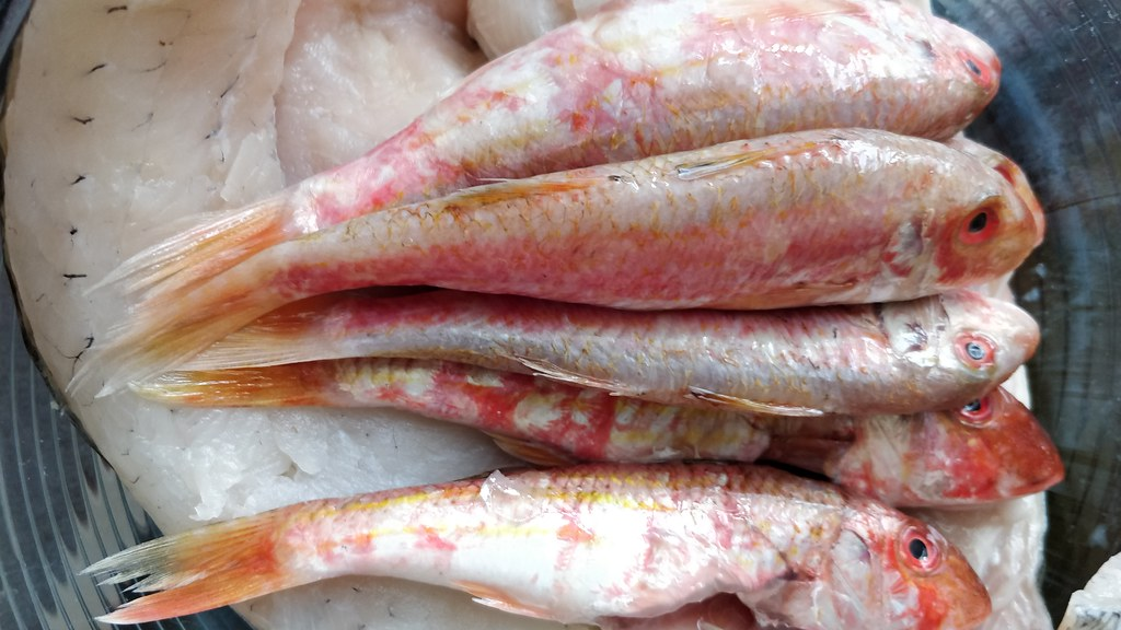 Rotbarbe direkt vom Fischhändler