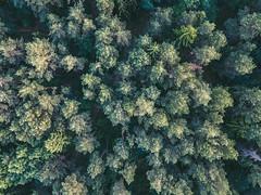 Forest | Kaunas Aerial