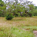 El Chato Tortoise Reserve-3912 by kasiahalka (Kasia Halka)
