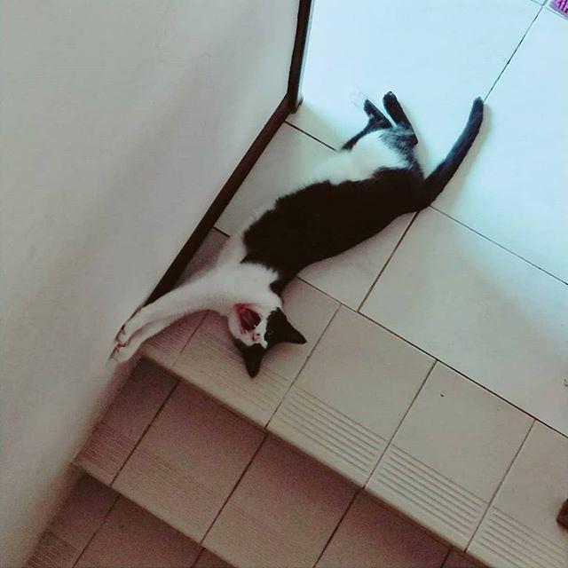 20180530 #戴家黑糖蜜 #cats #livingwithcats