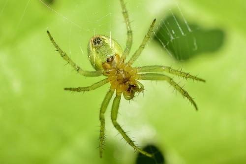 europe nikond5300 micronikkor40mm macro closeup park spring юженпарк софиябългарияевропа никонд5300 макро близъкплан spider паяк