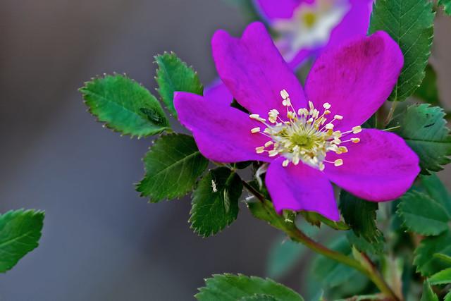 Wild-Flower-57-7D2-053118