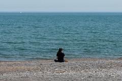 Ashbridges Bay (15 of 18)