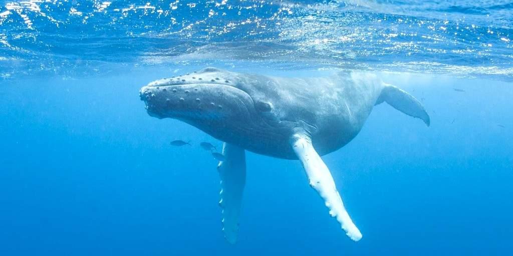 Les drones aident à libérer les baleines des débris marins