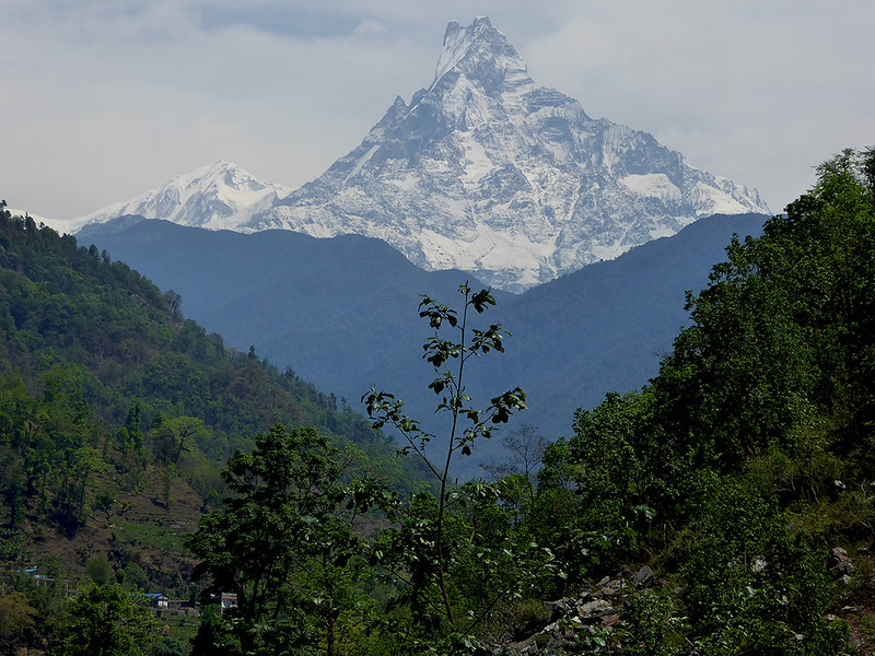 A view of one of the Annapurna Mountains through rugged bush on the Himalayan trek.