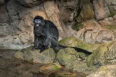 Jungleworld, Bronx Zoo, New York