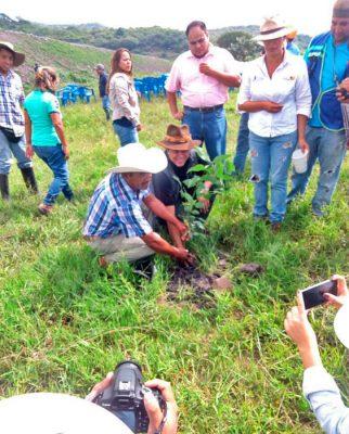 Cercos vivos - Presa Lluvia de Oro, Jonacatepec