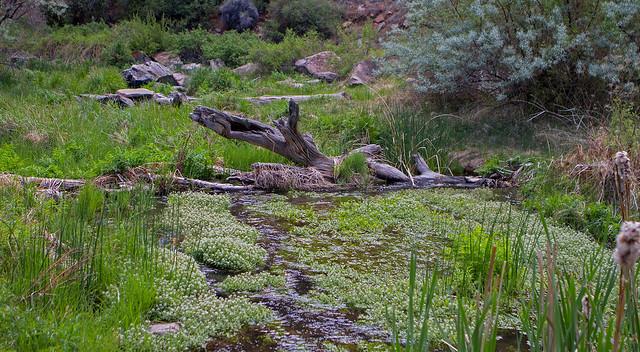 creek-2-7D1-053018