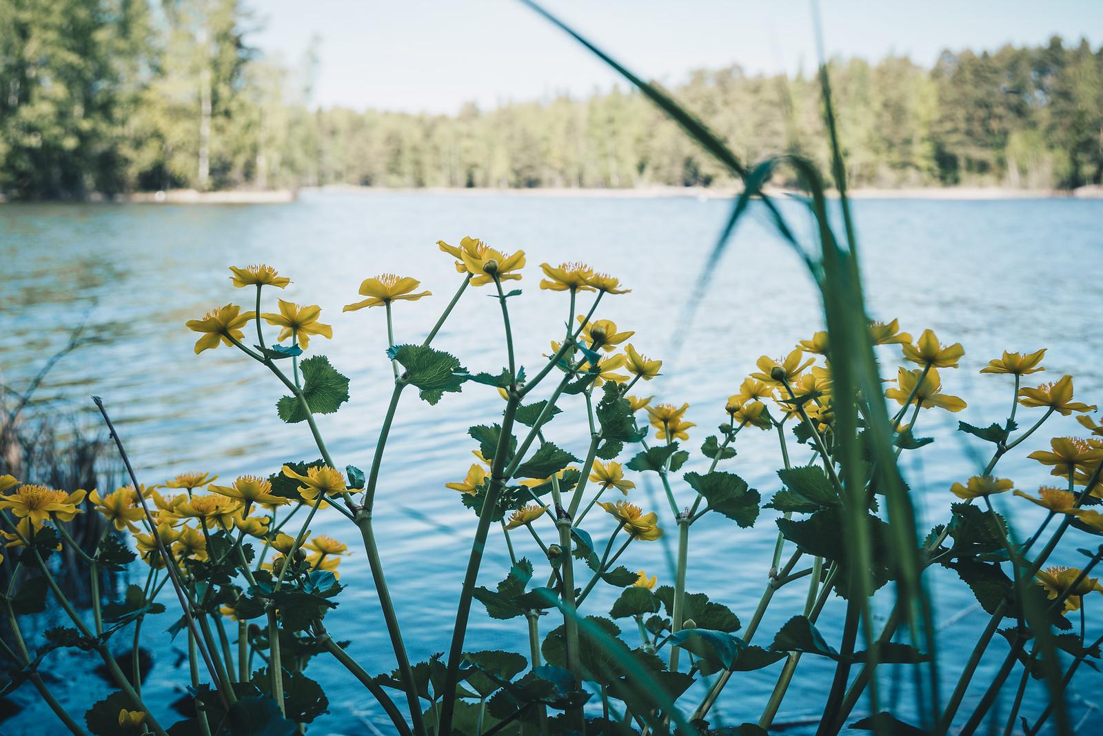 Rentukat Näsijärven rannalla