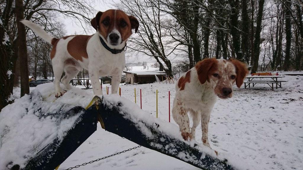 Welpen- und Junghundetraining