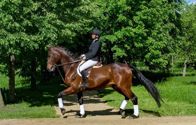Уроки верховой езды в музее-заповеднике Тарханы, фотоиллюстрации индивидуальных занятий конным спортом 11