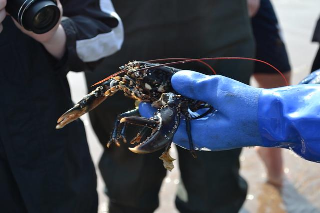 S2 Marine Habitats & Food Chains
