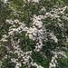 2018-05-24 (Day 144) Blossom